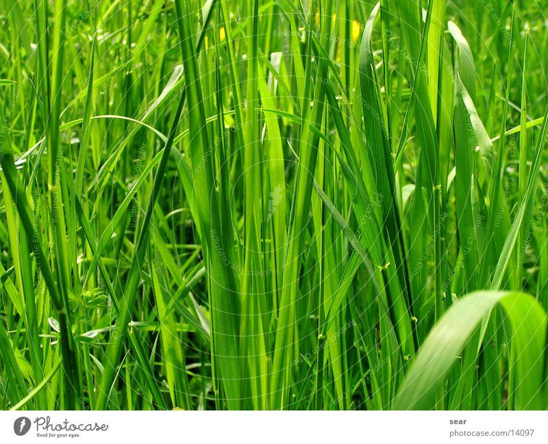 green idyll Grass Green Vacation & Travel Nature Idyll Freedom