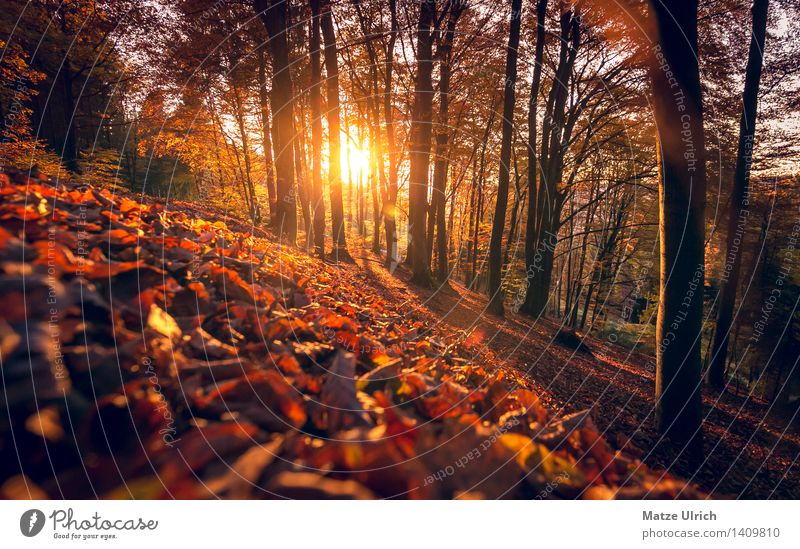 Sun forest 3 Environment Nature Sunrise Sunset Sunlight Autumn Beautiful weather Warmth Tree Leaf Forest Hill Automn wood Leaf canopy Deciduous tree