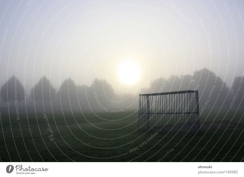 Early gate Calm Summer Sun Ball sports Soccer Fog Tree Traffic infrastructure Beginning Goal Enchanting Tension Treetop amateur football field early morning