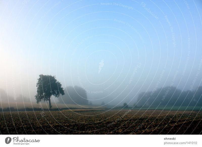 A dream in a tree Tree Loneliness Field Lawn Morning Delicate Sky Blue Haze Fog Beautiful Calm Beginning Harmonious Nature Hope New start Landscape