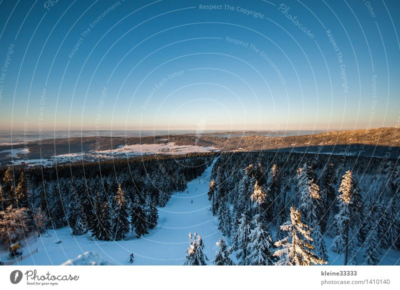Snow-covered landscape with spruces Far-off places Sun Winter Mountain Ski run Nature Forest Blue White Tree stump Bavaria Spruce Card Sky Cross country skiing