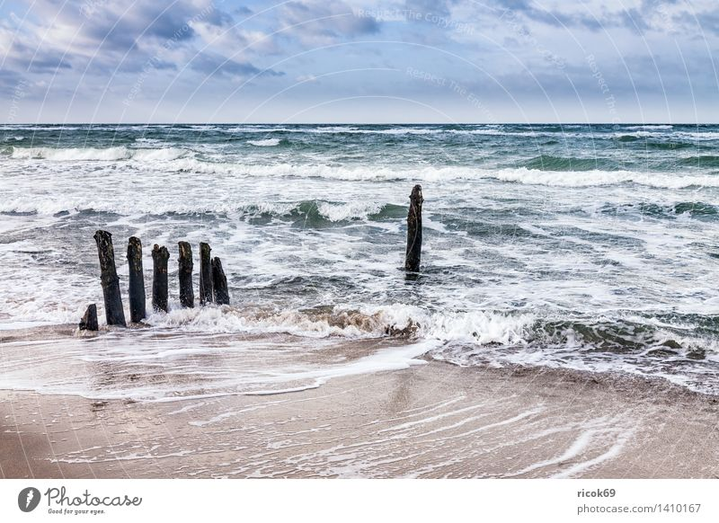 Buhnen at the coast of the Baltic Sea Relaxation Vacation & Travel Beach Ocean Waves Nature Landscape Water Clouds Gale Coast Wood Blue Tourism groynes