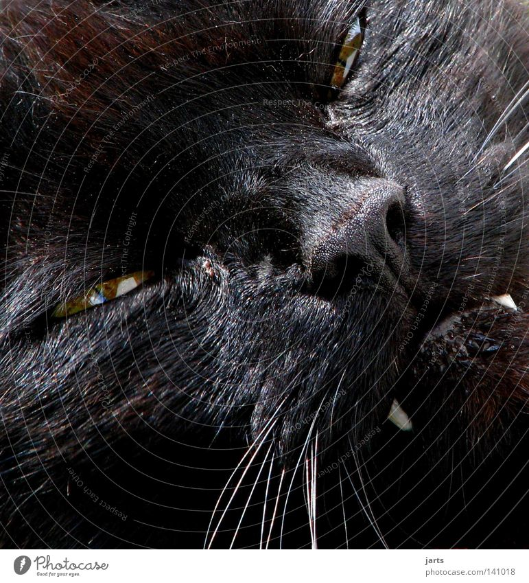 Black Animal Eyes Cat Fear Lighting Dangerous Set of teeth Creepy Evil Pet Mammal Panic Snout Domestic cat Cuddly toy