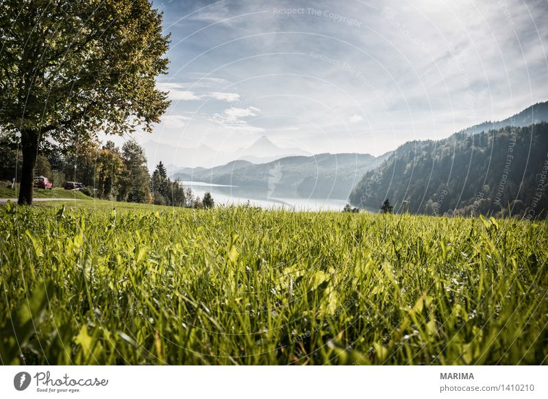 Autumn day in the Allgäu Calm Vacation & Travel Sun Mountain Hiking Environment Nature Landscape Plant Water Fog Tree Field Hill Rock Alps Pond Lake Stone Blue
