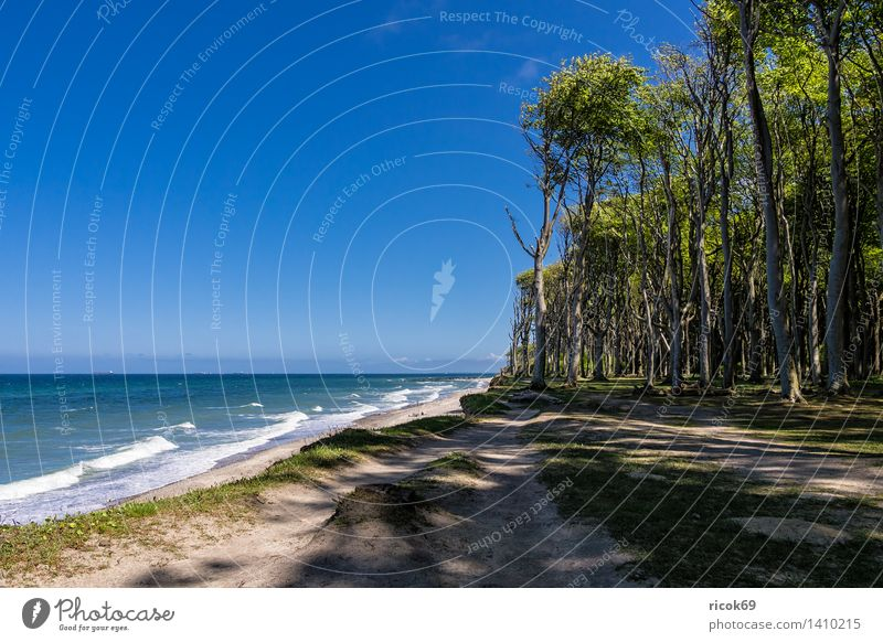 Coastal forest on the Baltic coast Relaxation Vacation & Travel Beach Ocean Waves Nature Landscape Water Clouds Tree Forest Baltic Sea Lanes & trails Blue
