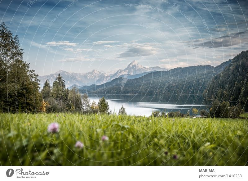 Autumn day in the Allgäu Calm Vacation & Travel Sun Mountain Hiking Environment Nature Landscape Plant Water Field Hill Rock Alps Pond Lake Stone Blue Green