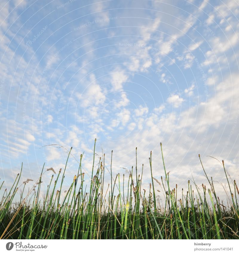 Sky Nature Plant Summer Clouds Relaxation Landscape Grass Spring Weather Germany Field Background picture Growth Perspective Grain