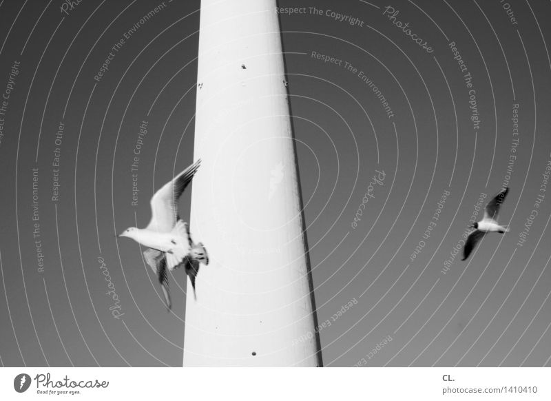 air berlin Sky Cloudless sky Beautiful weather Berlin Town Tower Building Berlin TV Tower Animal Wild animal Bird Wing Seagull 3 Flying Tall Freedom