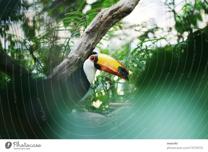 toucan Nature Animal Plant Tree Bushes Wild animal Bird Animal face 1 Moody Tucans Exotic Virgin forest South America Beak Beautiful Travel photography