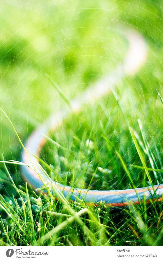 Water Plant Flower Meadow Garden Fear Dangerous Stripe Threat Lawn Grass surface Striped False Crawl Panic Poison