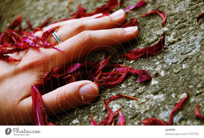 Transience. Hand Blossom leave Rose leaves Past Stone floor Stone slab Gray Red Violet Fingers Fingernail Thumb Forefinger Ring finger Middle finger Ornate
