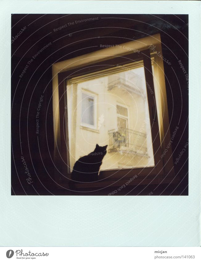 My first Polaroid Analog 600 Cat Dark Black Meow Window Vantage point Sit Crouch Observe Beautiful Animal Pet Window pane Open Wait Light Square Picture frame