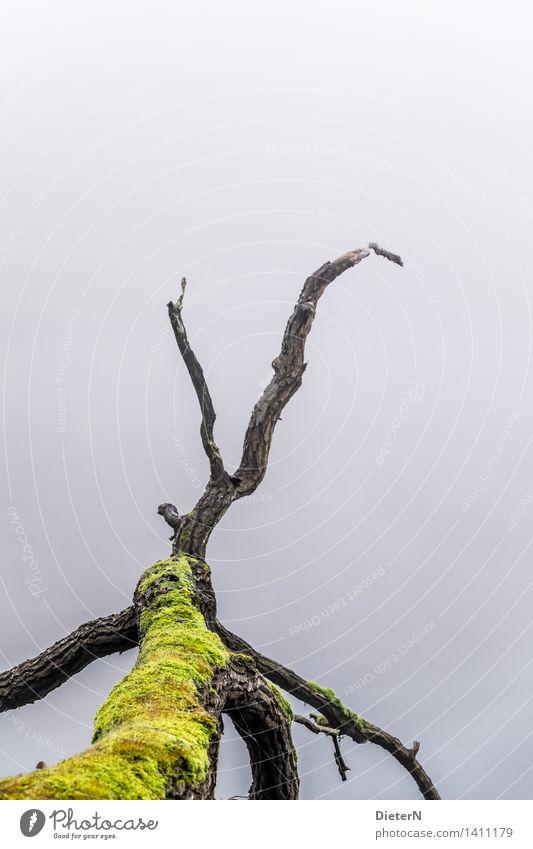 Old Green Water Tree Calm Black Autumn Gray Lake Weather Fog Lakeside River bank Moss Log