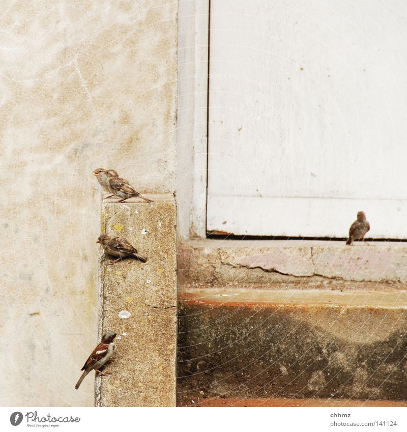 City Relaxation Life Wall (barrier) Funny Bird Door Sit Stairs Wait Multiple Many Curiosity Herd Sparrow Poultry