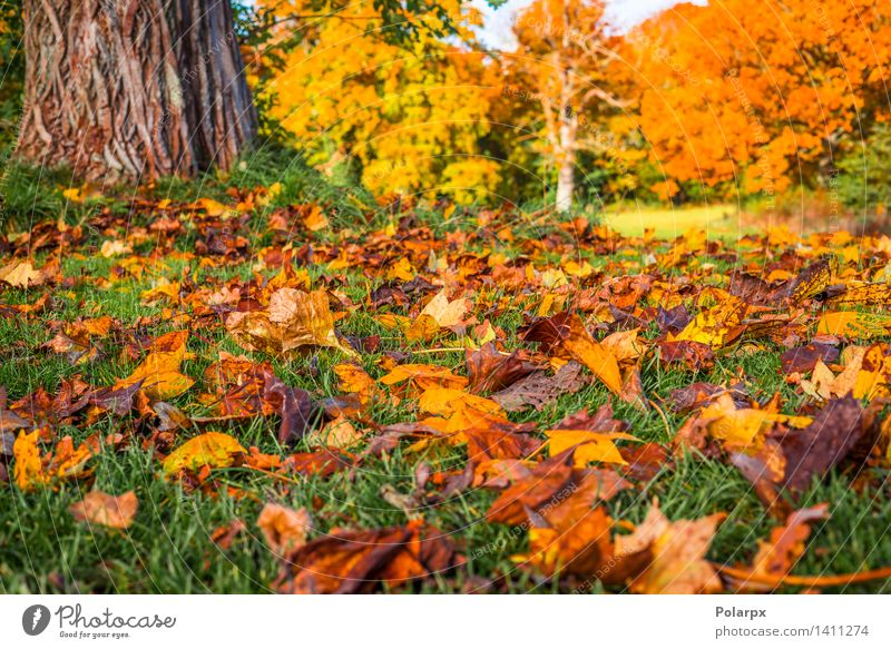 Autumn leaves under a tree in the fall Beautiful Sun Environment Nature Landscape Plant Tree Leaf Park Meadow Forest Bright Natural Brown Yellow Gold Green Red
