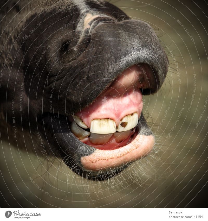 To talk Fear Horse Communicate Set of teeth Pasture Facial hair Mammal Panic Dentist Muzzle Defensive Attack Toothbrush Nostrils