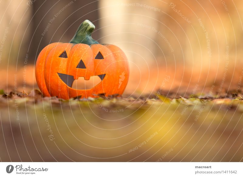 Happy Halloween Pumpkin Hallowe'en jack o lantern Autumn Autumn leaves Orange Yellow Seasons Face Grimace Laughter Smiling Vegetable Nature Natural Leaf