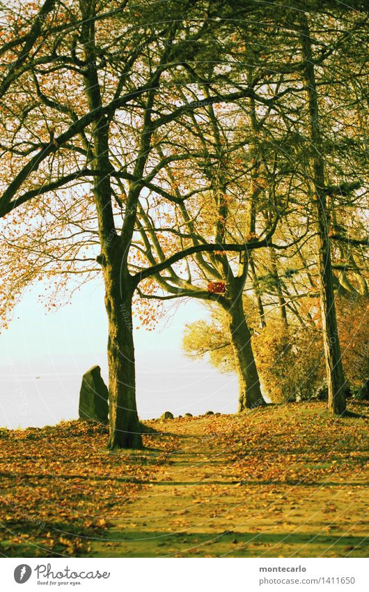 Sky Nature Plant Water Sun Tree Landscape Leaf Environment Warmth Autumn Emotions Meadow Grass Natural Moody
