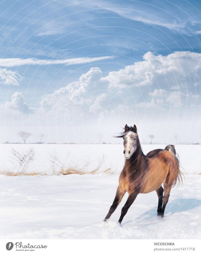 Sky Nature Animal Joy Winter Emotions Snow Playing Power Action Beautiful weather Horse Comical Keeping of animals Stable Thoroughbred