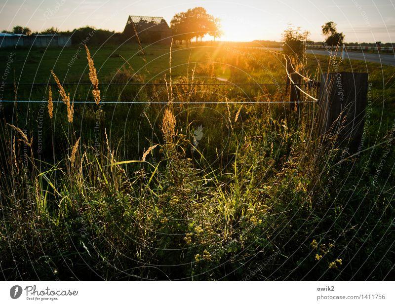 Sky Nature Plant Tree Landscape Calm Far-off places Environment Emotions Meadow Grass Bright Horizon Glittering Illuminate Idyll