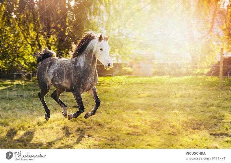 Nature Summer Tree Animal Spring Autumn Meadow Grass Lifestyle Design Park Power Bushes Speed Beautiful weather Horse
