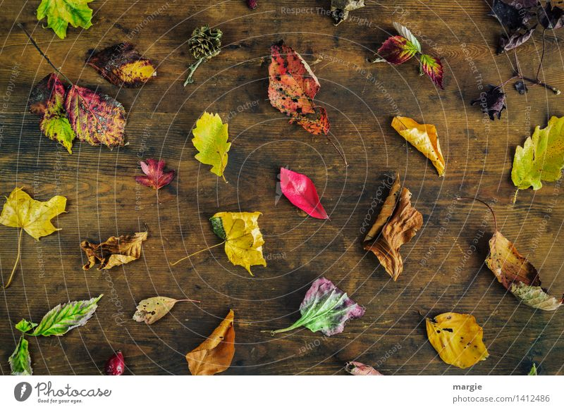 The classic - colourful autumn Environment Nature Plant Animal Tree Leaf Multicoloured Yellow Green Red Oak leaf Collection Many Difference To dry up Autumn