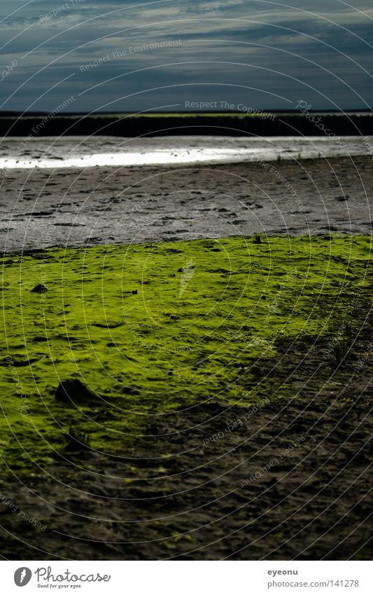 Sky Ocean Green Lake Coast Moss North Sea Mud Mud flats Dithmarschen
