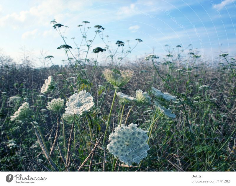 Nature Plant Summer Meadow Grass Blossom Field Idyll Growth Beautiful weather Blossoming Romance Muddled Rural Botany Pallid