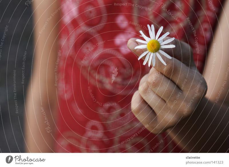 Hand White Flower Red Joy Calm Yellow Joie de vivre (Vitality) Fragrance Daisy Spring fever Chamomile Medicinal plant Children`s hand Weed