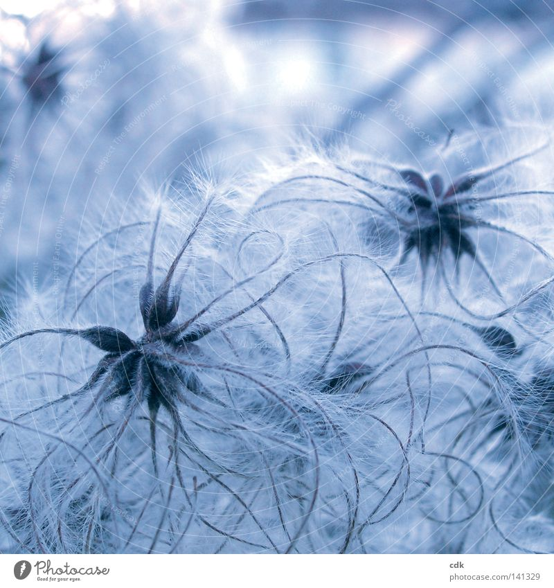 Nature Blue White Beautiful Plant Winter Colour Autumn Cold Playing Emotions Small Moody Line 2 Time