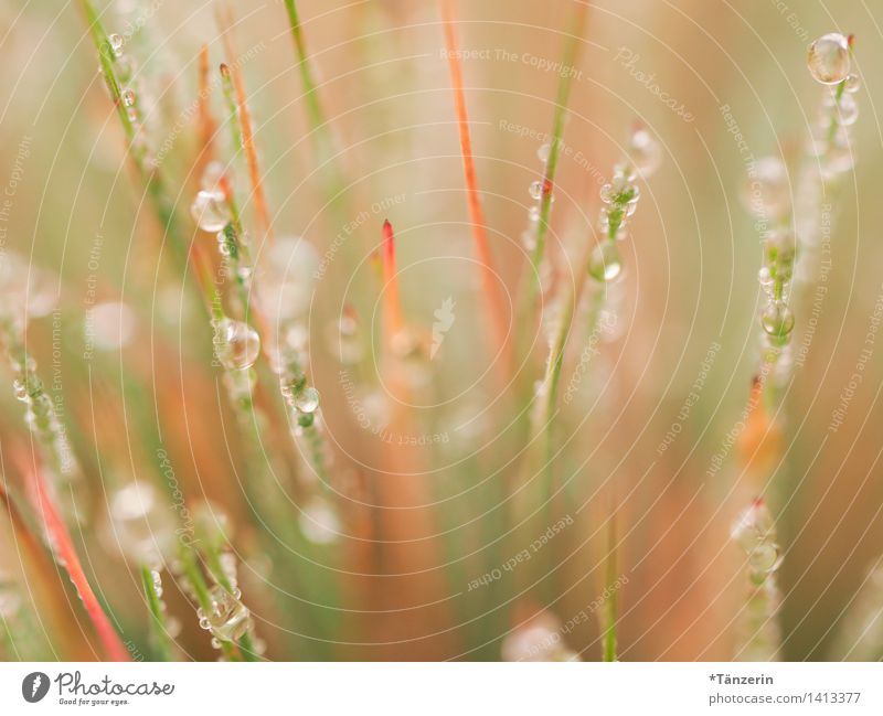 dew drops Environment Nature Plant Elements Drops of water Sun Autumn Beautiful weather Grass Garden Park Meadow Esthetic Happiness Fresh Wet Natural Soft