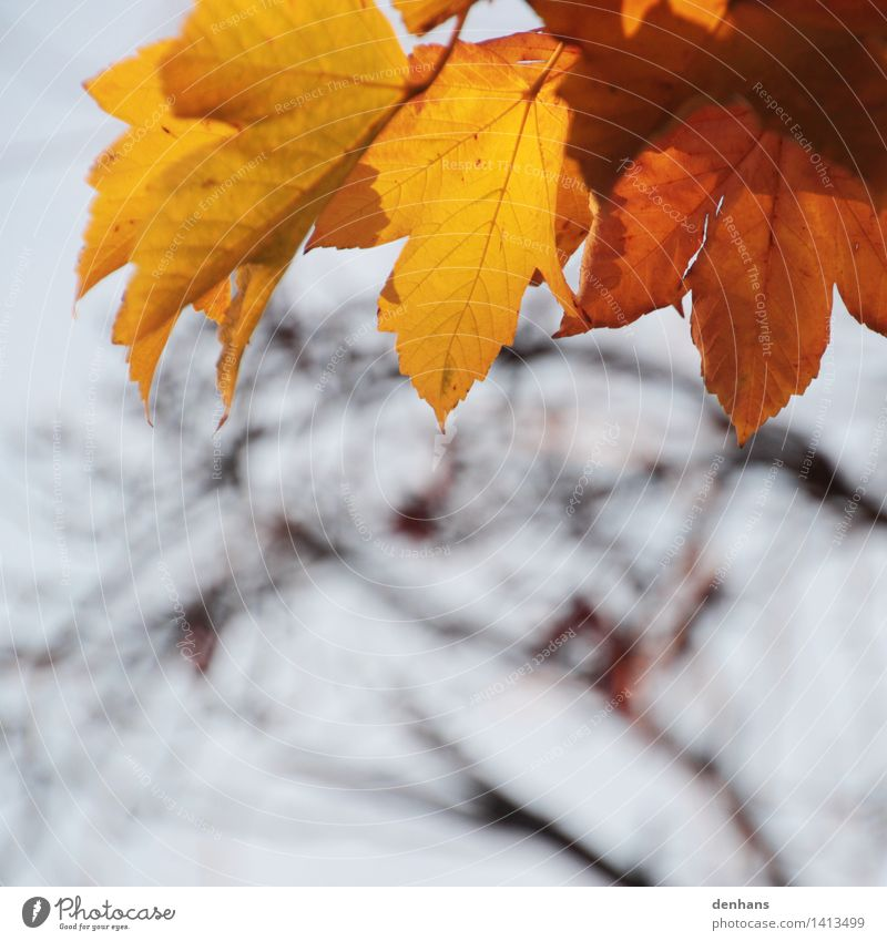 Sky Nature Old Plant Tree Loneliness Leaf Forest Environment Yellow Sadness Autumn Natural Death Brown Orange