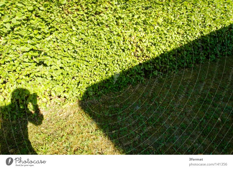 Human being Man Sun Summer Leaf Wall (building) Grass Garden Wall (barrier) Line Bright Success Lawn Sign Concentrate Border