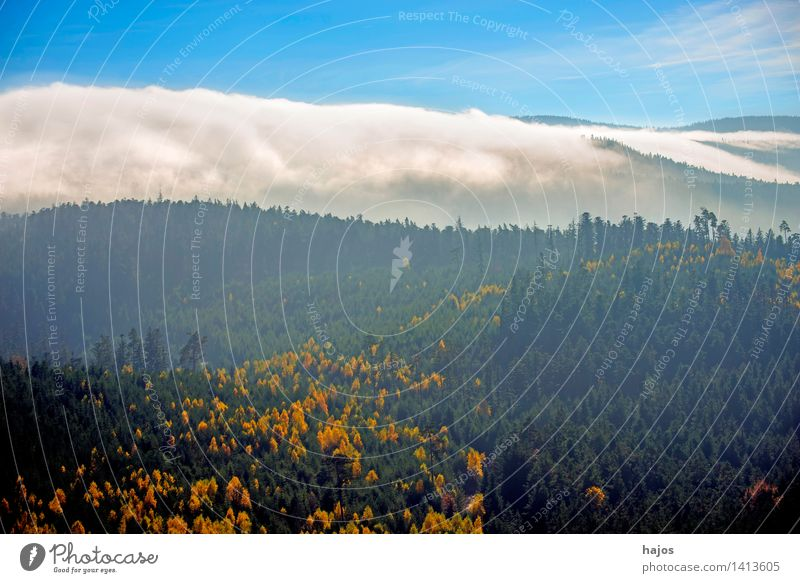View of the autumnal forests of the Vosges Mountains Tourism Far-off places Nature Sky Autumn Fog Tree Leaf Forest Hill Blue Yellow Rocher de Dabo France Alsace