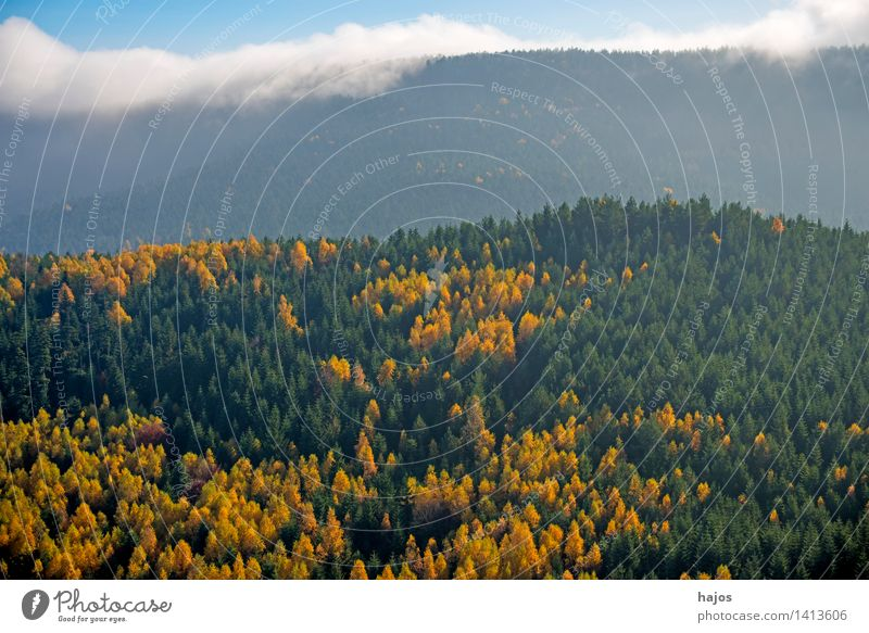 View of the autumnal forests of the Vosges Mountains Tourism Far-off places Nature Sky Autumn Fog Tree Leaf Forest Hill Beautiful Blue Brown Multicoloured