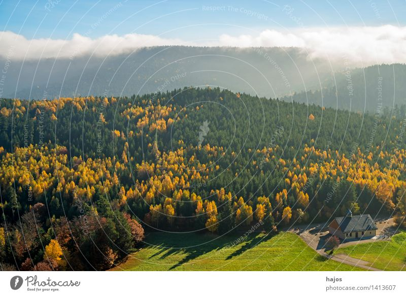 View autumnally discoloured forests of the Vosges Mountains Tourism Far-off places Nature Autumn Fog Tree Leaf Forest Hill Blue Yellow Rocher de Dabo France