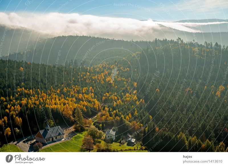 View of the autumnal forests of the Vosges Mountains Tourism Far-off places Nature Sky Autumn Fog Leaf Forest Hill Blue Brown Multicoloured Yellow