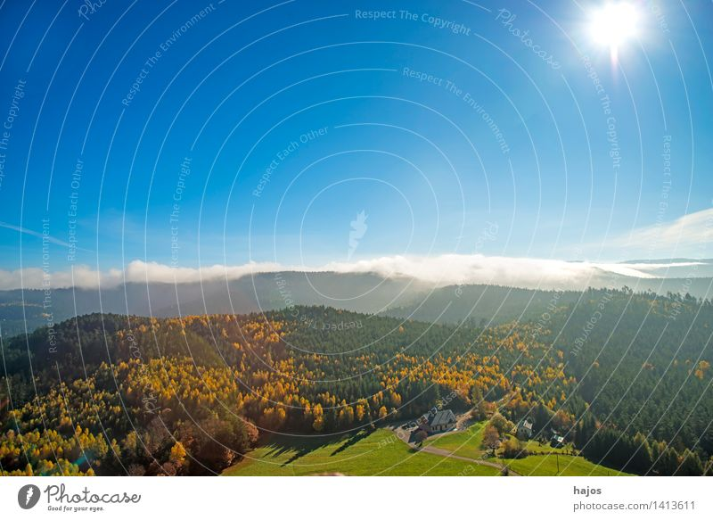 View of the autumnal forests of the Vosges Mountains Tourism Far-off places Nature Sky Autumn Fog Tree Leaf Forest Hill Beautiful Warmth Wild Blue Brown