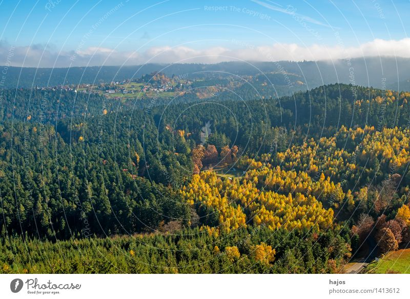 View of the autumnal forests of the Vosges Mountains Tourism Far-off places Nature Clouds Autumn Fog Tree Leaf Forest Hill Peak Blue Brown Multicoloured Yellow