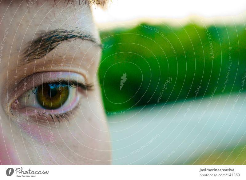 Woman Tree Face Eyes Anger Aggravation Eyelash Eyebrow Sweet chestnut Cordoba Thrashing