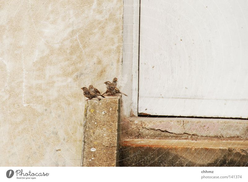 Relaxation Life Wall (barrier) Funny Bird Door Sit Stairs Wait Multiple Break Many Curiosity Herd Sparrow Poultry