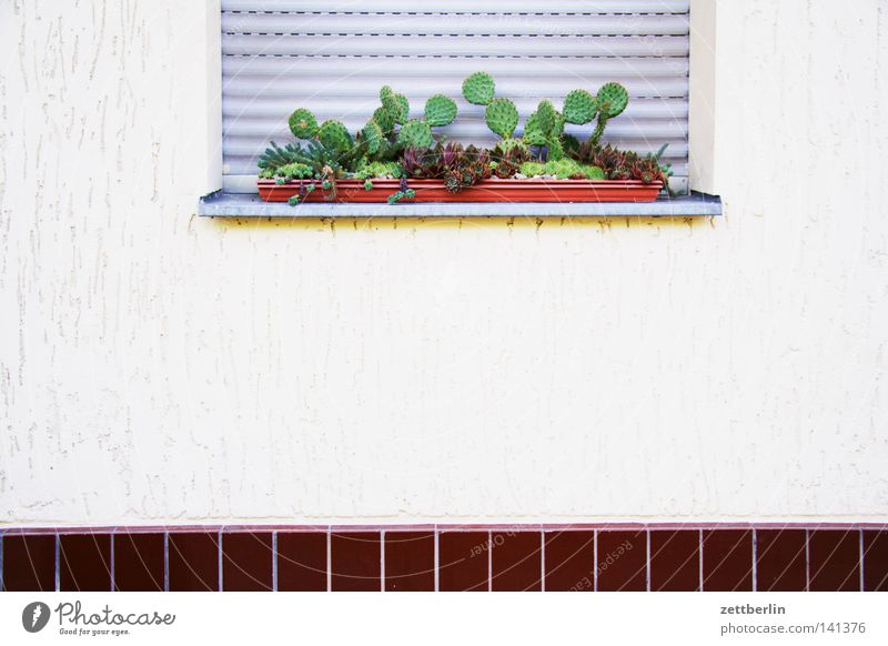 cacti Cactus Plant Oxygen Window box Venetian blinds Roller shutter Closed Plantlet Physics House (Residential Structure) Tenant Landlord Building Detail
