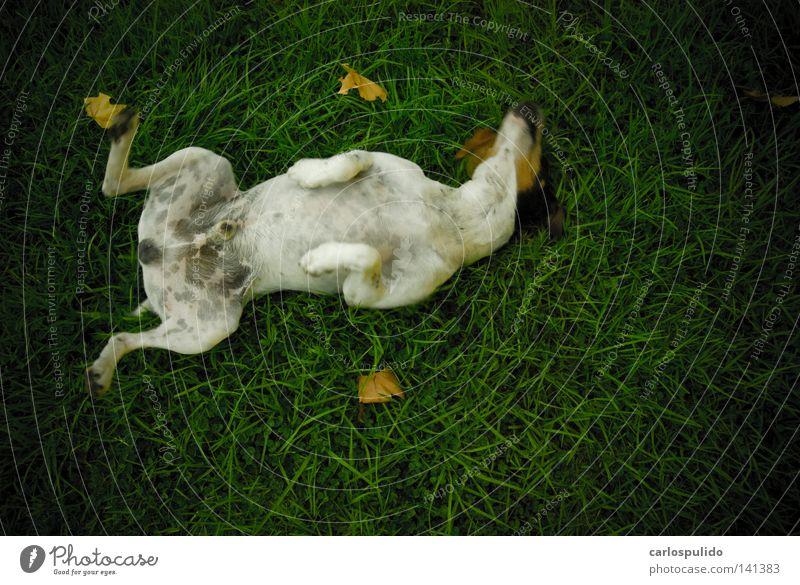 crazy dog Joy Animal Grass Dog Park