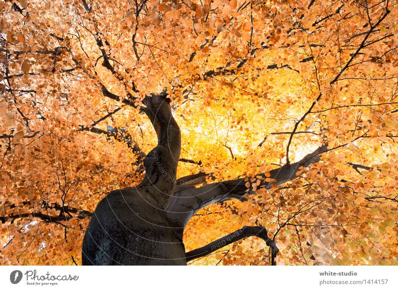 Absolute Autumn Environment Nature Plant Climate Weather Beautiful weather Tree Dream Life Rachis Junction Crossroads Branched Tree trunk Orange