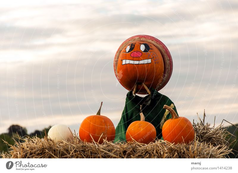 The grim pumpkin guard Food Autumn Pumpkin pumpkin face Observe Guard Face Scarecrow Painted Colour photo Multicoloured Exterior shot Deserted Copy Space left