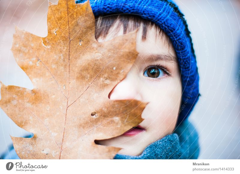 Do you see me? Child Toddler Boy (child) Infancy Eyes 1 Human being 3 - 8 years Looking Autumn Autumnal Early fall Seasons Cap Brown Brunette Leaf Colour photo
