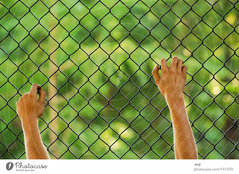 wire mesh fence Skin Freedom Hand Green Fear End Wire netting Fence Captured Helpless Rectangle Guantanamo Criminality Laws and Regulations Panic Penitentiary