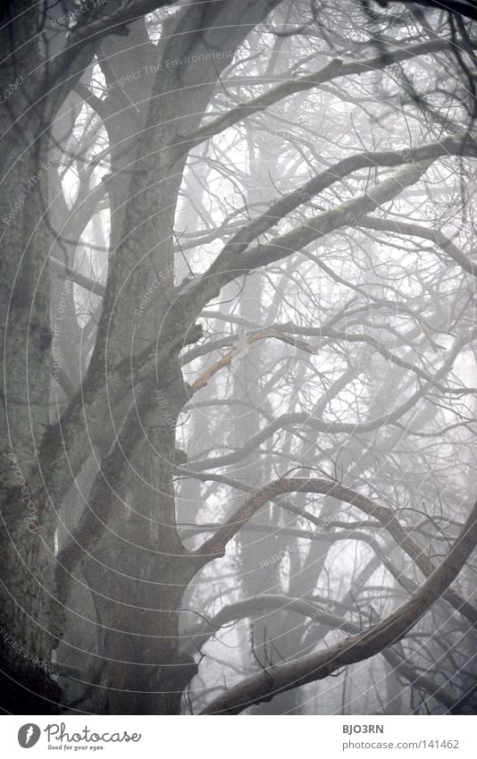 foggy woods #8 Fog Loneliness Cold Dark Tree Winter Forest Wet Damp Frozen Nature Misty atmosphere Ambiguous Mysterious Portrait format Vertical trees baeme