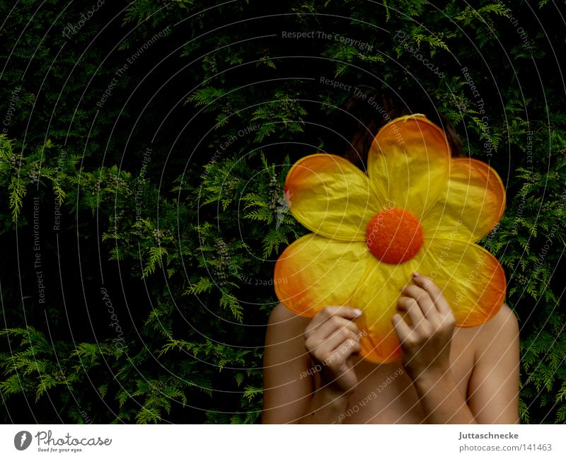 Flower Yellow Blossom Garden Contentment Orange Mask Mysterious Infancy To hold on Hide Hiding place Blossom leave Hidden Laminate
