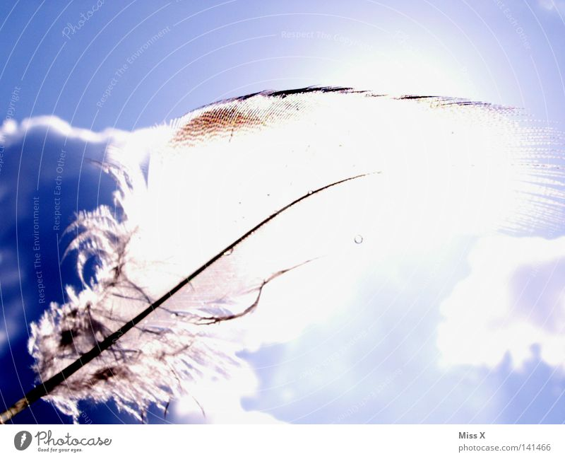 as light as a feather Colour photo Exterior shot Light Summer Sun Sky Clouds Beautiful weather Wind Bird Flying Soft Blue White Ease Feather Easy Fuzz Smooth
